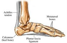 Example of Achilles and Plantar fascia insertions.